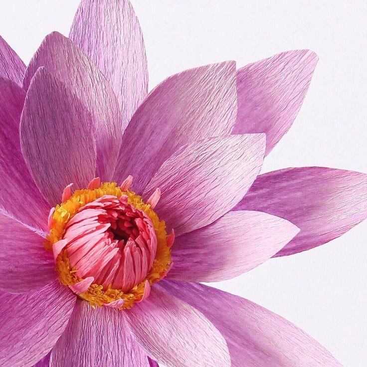 184 Best Giant Paper Flowers Veliki Cvetovi Od Papira