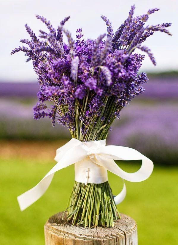 La Petite Maison: Flores de Lavanda