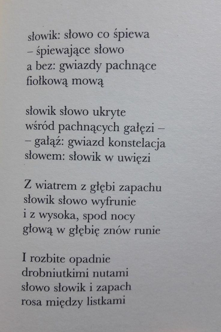 """""""Krzak bzu śpiewający""""  Janusz Różewicz"""