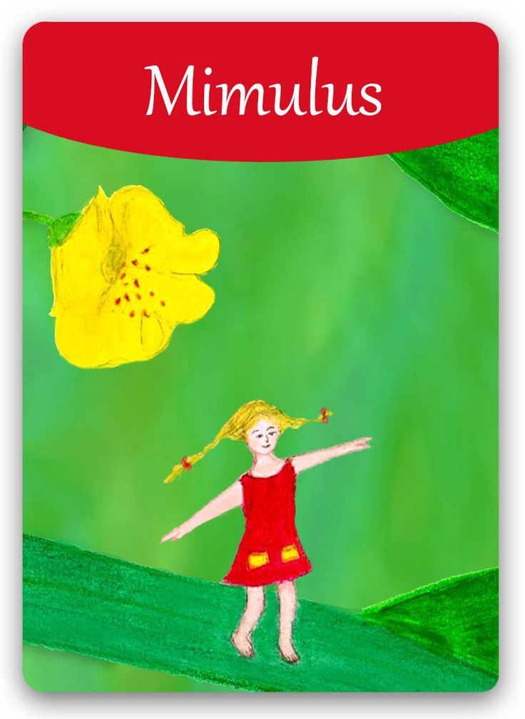 "Bach Flower Cards [Mimulus] - Mimulus personality is constantly filled with anxiety, has a great need for ""down time"" to withdraw to a quiet spot and recharge without guilt. Treatment with this Essence will help the Mimulus personality find its way out of the confusion and tackle his fears - which causes anxiety to dissolve. When in treatment, focusing upon and resolving one anxiety often causes several others to disappear at the same time."
