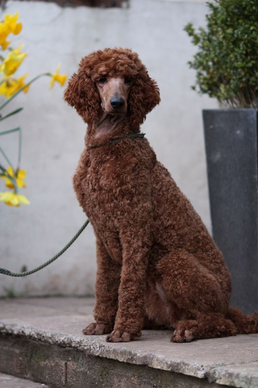 The French Dog Named Pepe