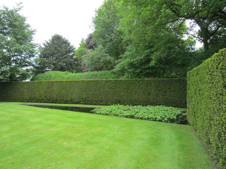 Garden Design Hedges 20 best pleached hedge images on pinterest | hedges, topiaries and
