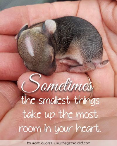 Sometimes, the smallest things take up the most room in your heart.  #heart #most #quotes #room #smallest #sometimes #things