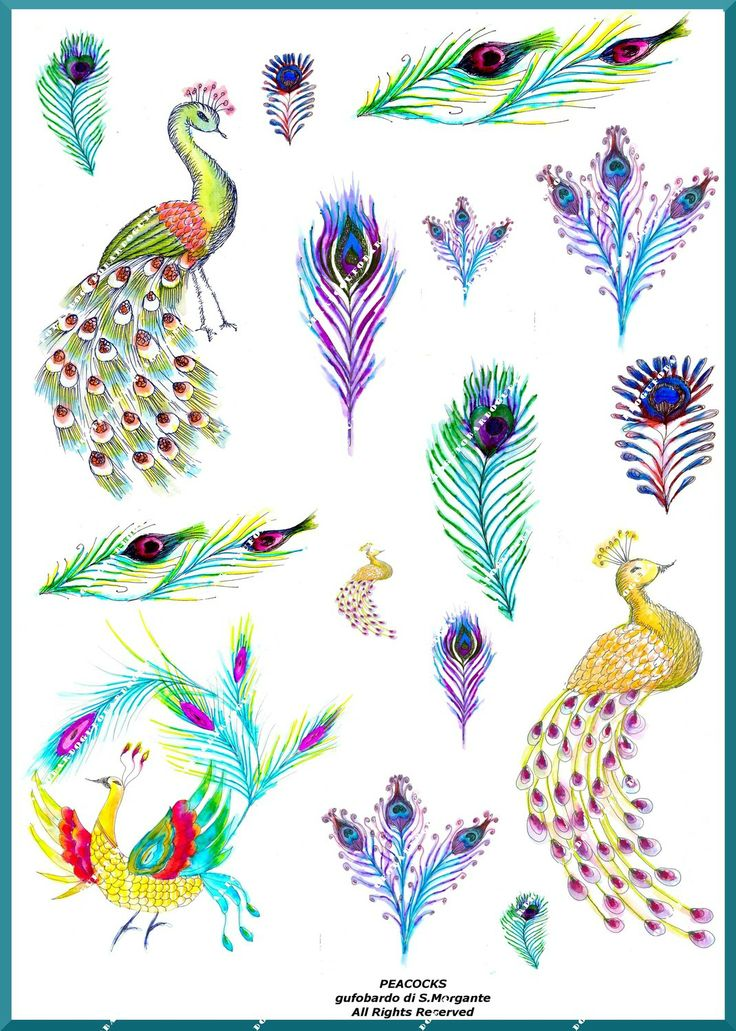 Peacocks IllustrationDownload and printCollage by gufobardo, €4.50