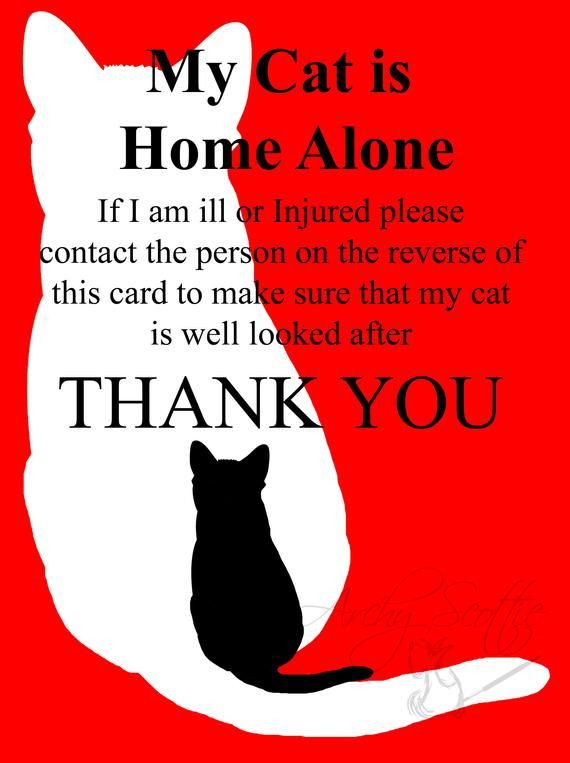 Check Out This Item In My Etsy Shop Https Www Etsy Com Uk Listing 695802827 Cat Emergency Contact Pet Alert Cards Cat Emergency Pets Emergency