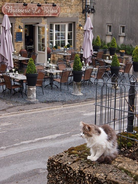 Cat from Chassepierre {Belgium} Cats, Funny animal