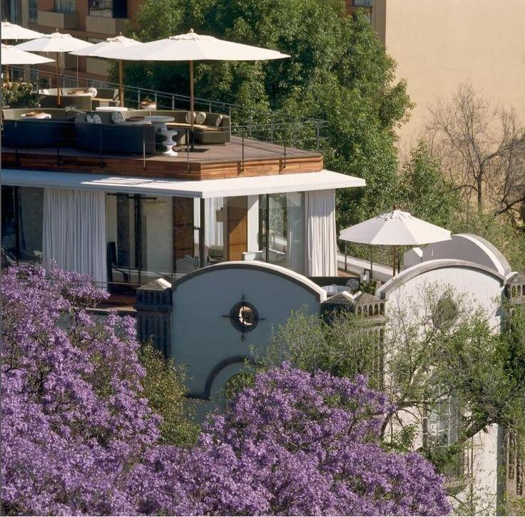 vista de la terraza del hotel condesa DF mexico arbol con flores moradas