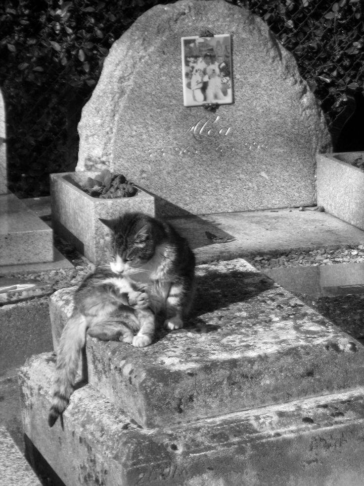 Cat on grave at Cimetière des Chiens, Asnieresur- Seine, Paris (2011). Taken from, Animal Death Edited by Jay Johnston and Fiona Probyn-Rapsey.