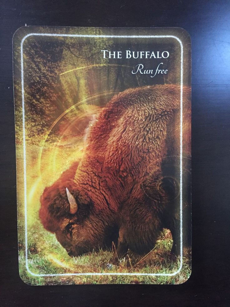 Message from the Buffalo  https://animalsoulsentient.com/2016/09/09/message-from-the-buffalo/