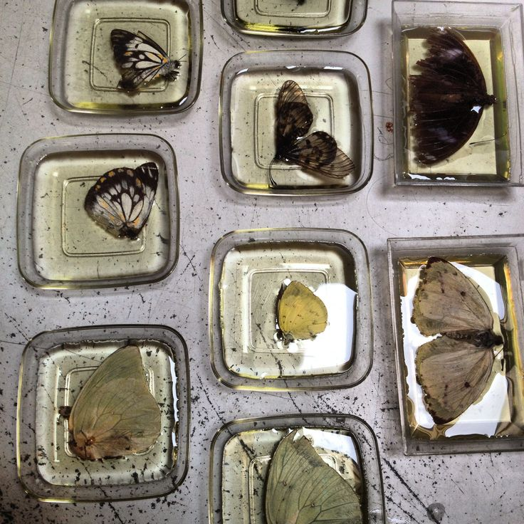 Butterflies n bugs in resin