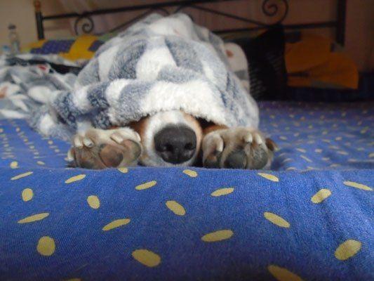 Στο Μεξικό υπάρχει μια ράτσα σκύλου την οποία την εκτρέφουν για έναν και μόνο μοναδικό σκοπό...ως θερμαντικό σώμα μικρού χώρου! Το κυριότερο όλων, αυτοί ...