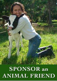 Best VEGAN animal shelter in South America www.paramatmafarm.com