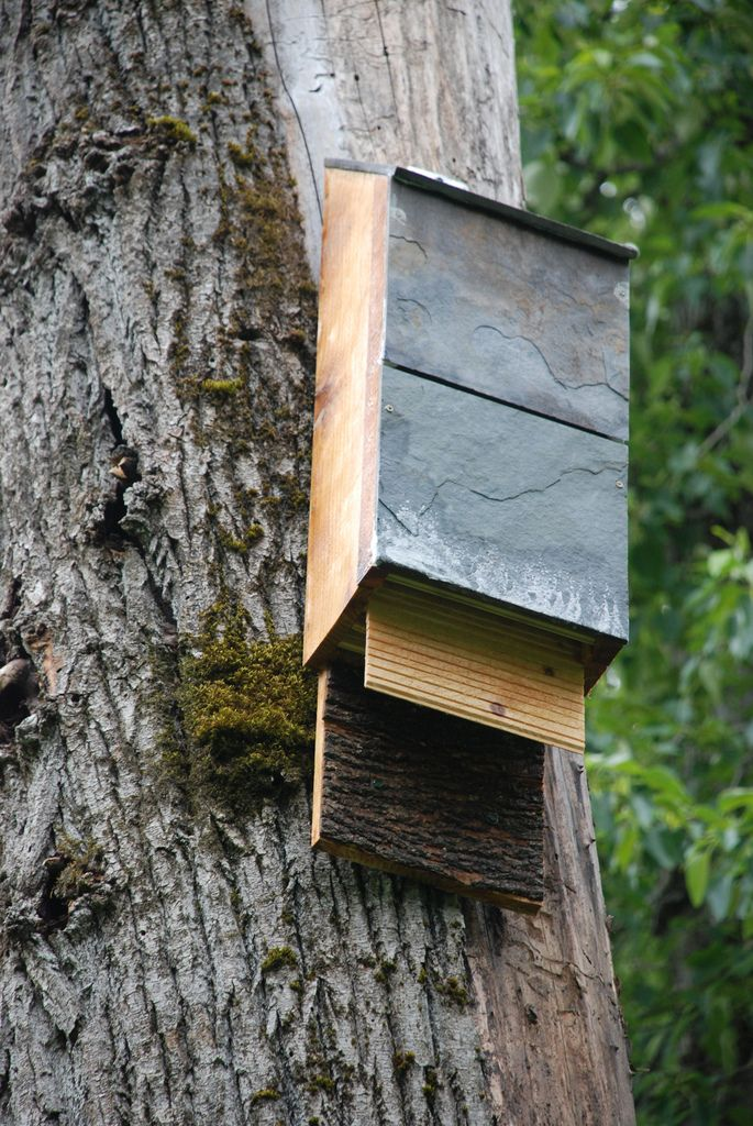 29 best bat houses images on pinterest bats bird houses for Bat house plans
