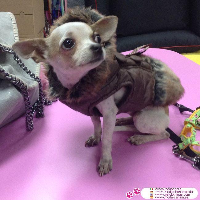 Piumino per Cani Marrone con pelliccia #ModaCani #Chihuahua - Piumino marrone per cani di piccola taglia (yorkshire, barboncino), impreziosito da bottoni sul dorso e con pelliccia sintetica sulla parte finale