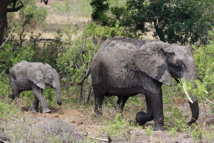 Wildlife Tourism: How to be a responsible traveller | Yoko Meshi