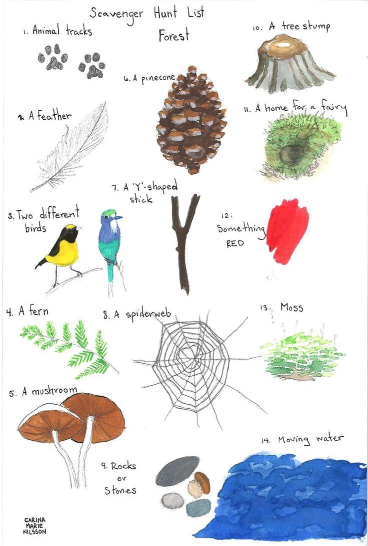 paper bluejay: a forest scavenger hunt... downloadable pdf illustrated scavenger hunt