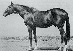 Lexington (1850-1875) US Thoroughbred race horse,  won 6 of his 7 race starts. Perhaps his greatest fame came as the most successful sire of the 2nd half of the 19th century; he was the Leading sire in North America 16 times, & of his many brood mare and racer progeny one was Preakness, the namesake of the famous race at Pimlico. He was a bay colt bred by Dr. Elisha Warfield at Warfield's stud farm, The Meadows, near Lexington, KY. He stood for a time at the Nantura Stock Farm  in Midway, KY