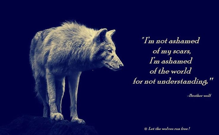 I'm Not Ashamed of My Scars, I'm Ashamed of the World For Not Understanding--Let the Wolves Run Free Photo