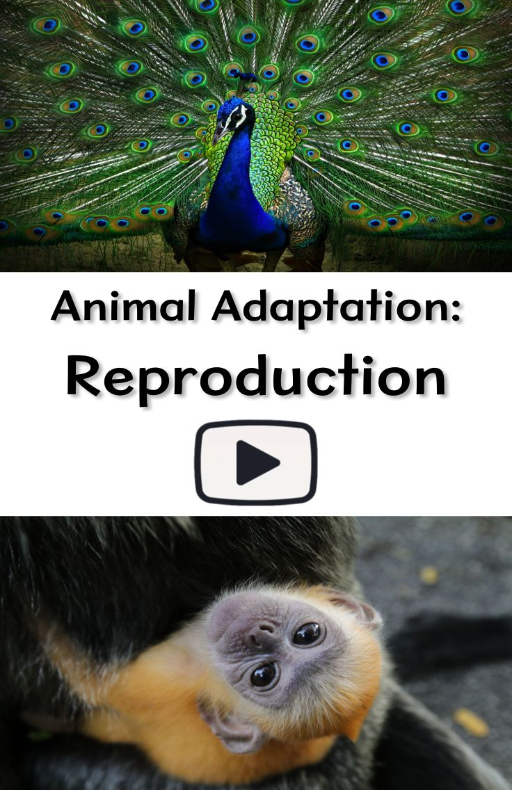 Animal Adaptation Reproduction Animal adaptations