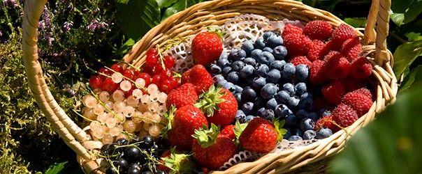 Confiture fraises abricot rhubarbe Bernadette Vérot est productrice de fruits rouges du GIE Perles Rouges des Monts du Velay à Montregard.  Vous pouvez retrouver ces délicieuses productions : confitures, coulis, sirops, sorbets au Panier Paysan zone du Pêcher à Monistrol-sur-Loire 04.71.66.55.09