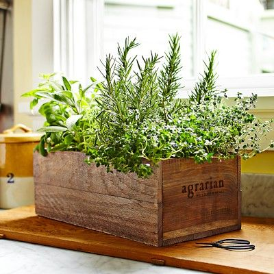 Agrarian Wooden Crate #WilliamsSonoma  This inspires me!  While I can't afford this, I do have a similar shaped planter not being used.  I'm going to get some herb seeds and potting soil and put this in my kitchen so I can have my favorite fresh herbs when I want them.