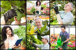 pielęgnacja zieleni pielęgnacja roślin