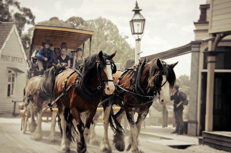 A dusty ride at Sovereign Hill...By Eveolv Photography
