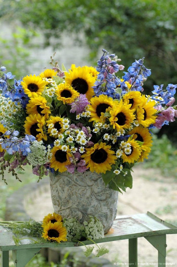 <3 sunflowers & blue bella in crock