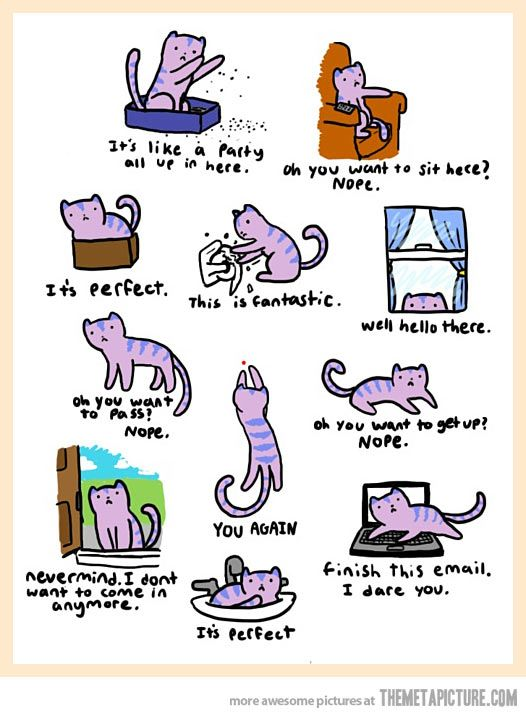 Somewhere in the world, a cat is doing one of these things right now…