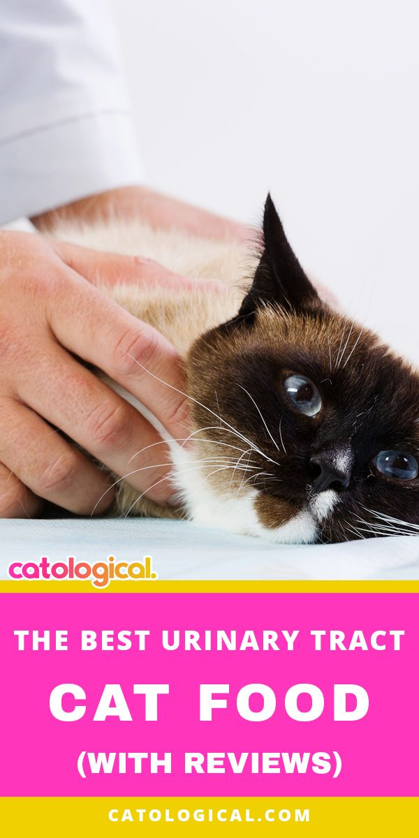Does Your Cat Suffer From Painful Urinary Tract Issues Did You Know That The Main Reason Cats Have Urinary Issues Is Urinary Tract Cat Food Cat Care Cat Food