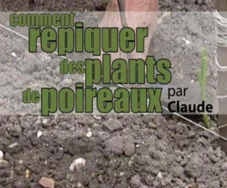 L'Association du Potager Caillebotte de Yerres (Essonne), nous présente ses trucs et astuces pour repiquer des poireaux. Par Claude Bureau