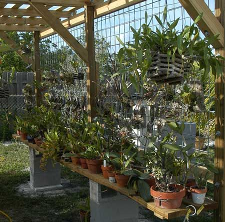 diy cheap orchid shade house - Google Search