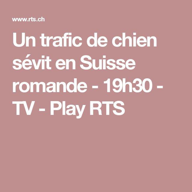 Un trafic de chien sévit en Suisse romande - 19h30 - TV - Play RTS