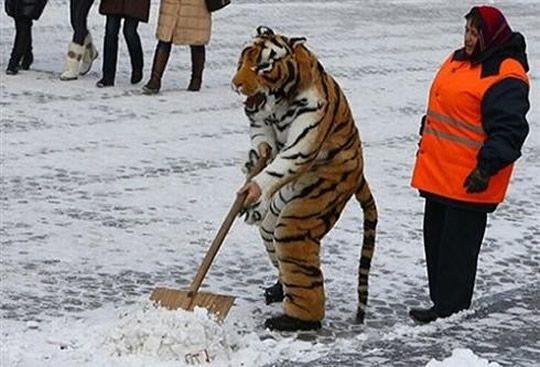 Well. There's that.: Casual Friday, God, Russia, Snow, Costume, Community Service, Tigers, Photo, Funny People