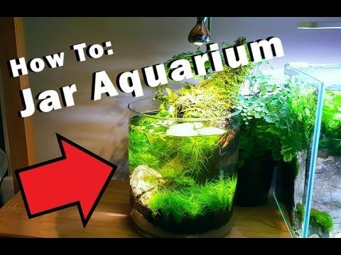 How To 1 Gallon Aquarium No Filter No Heater No Ferts Youtube Aquarium Diy Fish Tank 1 Gallon Fish Tank
