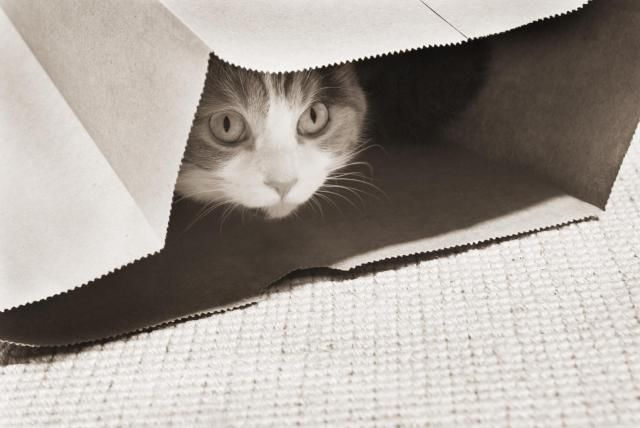 How to Build Confidence in Fearful Felines