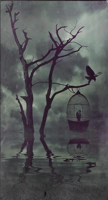 Raven on Branch                                                                                                             Raven in Cage