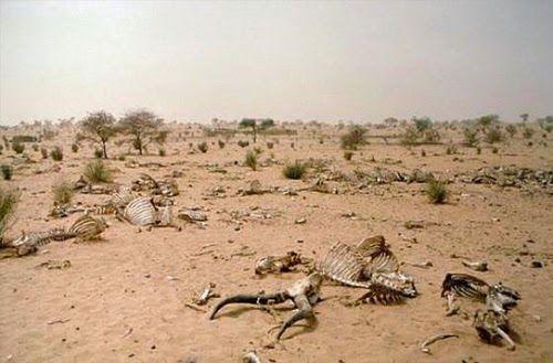Kekeringan akibat dari pemanasan global