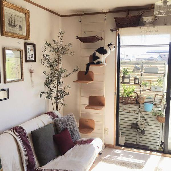 Furniture For Sale Online Furnitureforbedroom Cat Playground Cat Diy Cat Bedroom