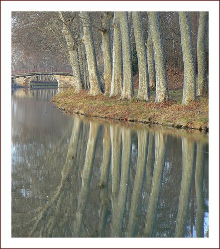 Les platanes | Canal du Midi www.audetourisme.com