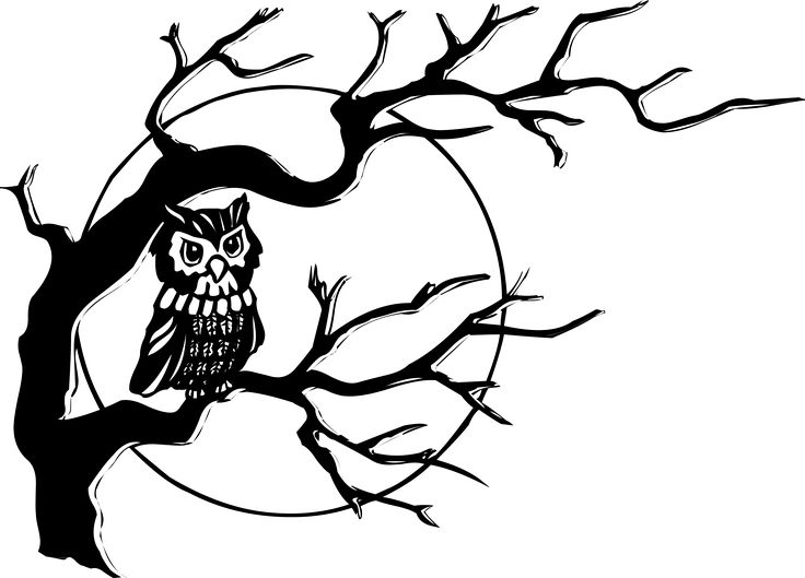 Owl in tree by liftarn