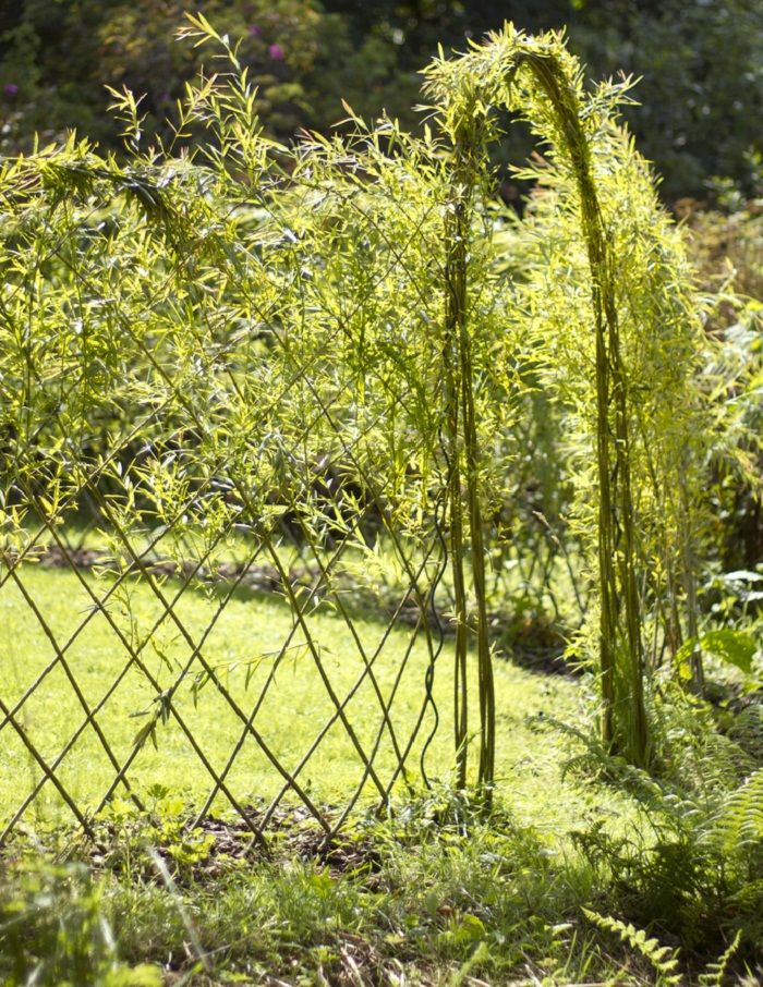 20 Beautiful Examples Of Living Willow Fences   ICreatived