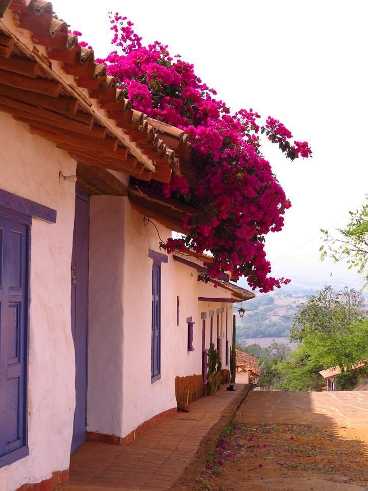 Se resalta los colores de las flores en la casa morada, es un camino digno de Barichara por su arquitectura colonial y su clima fresco, se ven árboles adornando el paisaje.