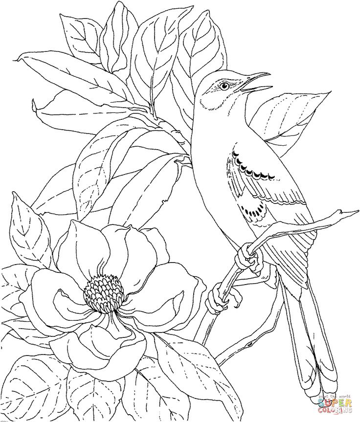 Mockingbird And Magnolia Mississippi State Bird Flower Coloring Page From Magnolias Category Select 21274 Printable Crafts Of Cartoons Nature