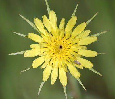 Music Writer: Lynda Dobbin-Turner the magnficence of wildflowers at Lavenham,Manitoba