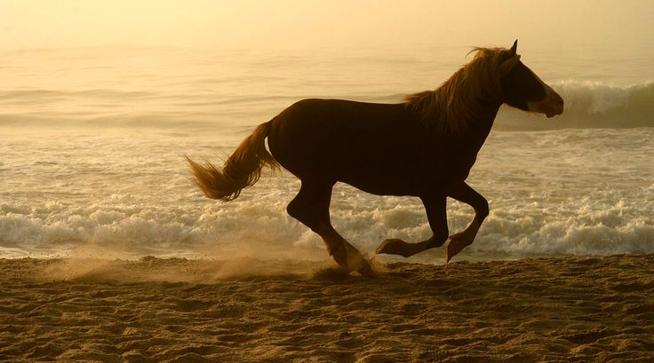 17 Best Images About Chincoteague On Pinterest Virginia