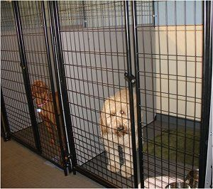 1000 images about dog kennel ideas on pinterest for for Building a dog kennel business