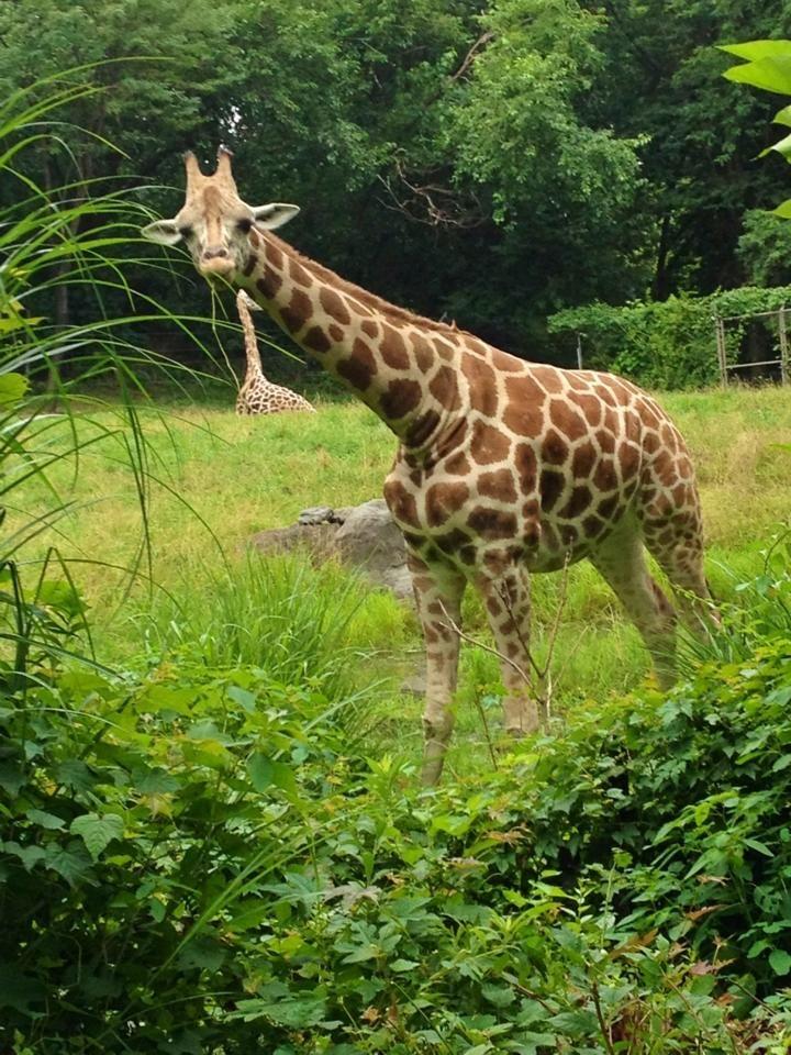 Zoo coupons houston