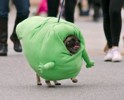 funny pictures about pug marching as slimer in the spooky pooch parade oh and cool pics about pug marching as slimer in the spooky pooch parade - Pugs Halloween Costumes