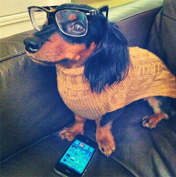 Hipster weenie.